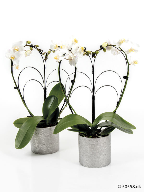 PHALAENOPSIS IN CERAMIC